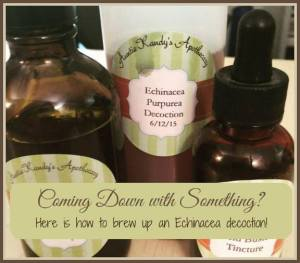 Echinacea decoction